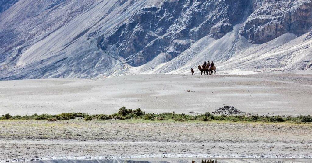Nubra camel safari