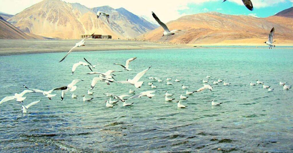 Bird watching at Tso Moriri Lake